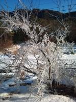 2011-01-13 15.26.15.jpg