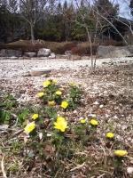 2011-04-11 11.51.26.jpg