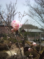2011-05-02 12.32.39.jpg