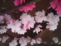 2011-05-19 17.59.20.jpg